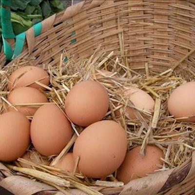 Doğal Yumurta